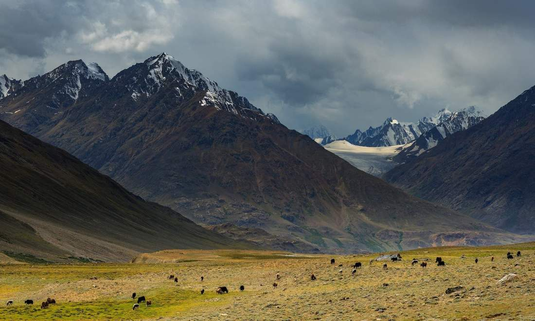 A yak herd near the Laila Rabat campsite. — *Photo by author*