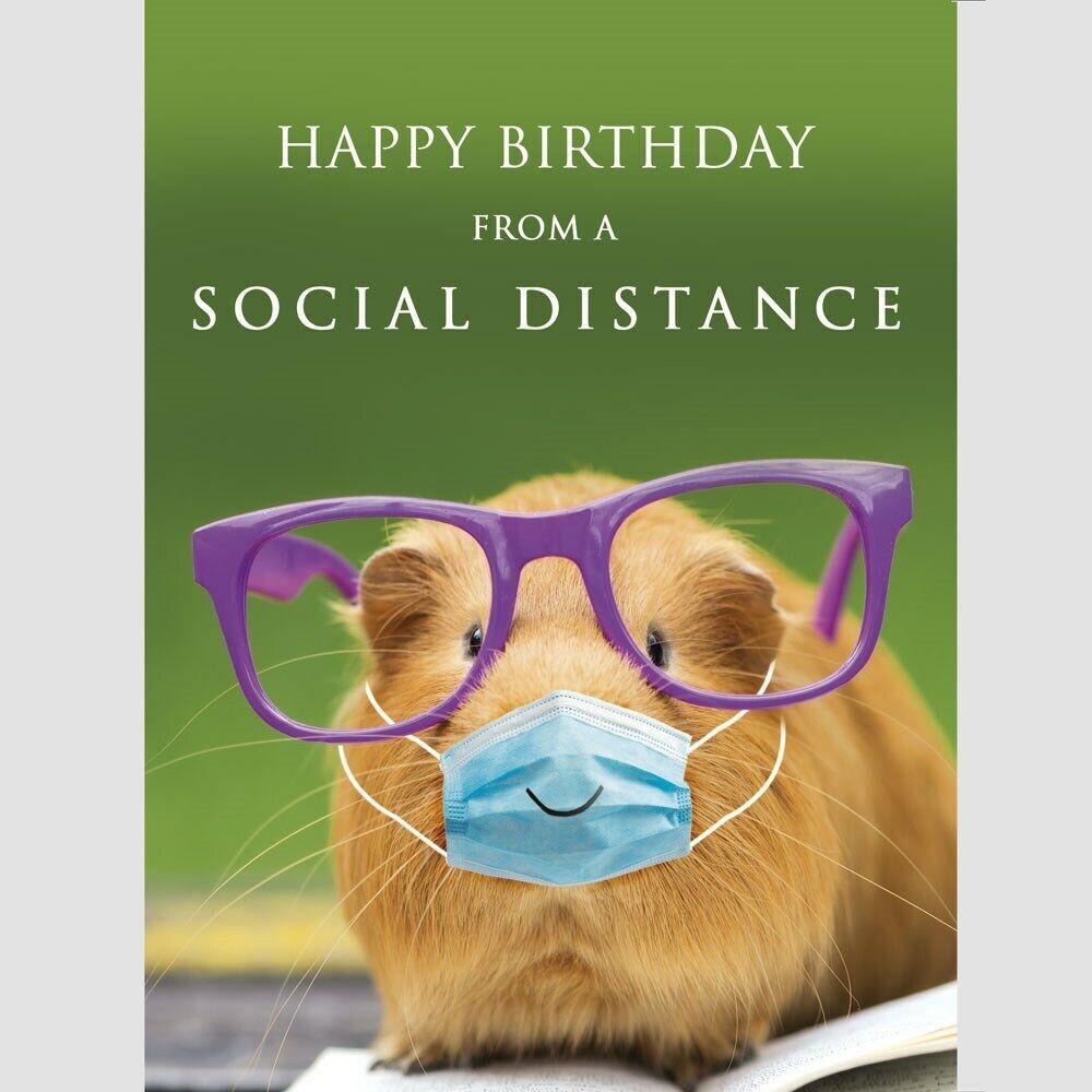 Guinea Pig Birthday Card Happy Birthday From A Social Distance Fun Greeting Card 5056376901262 Ebay