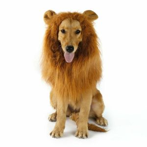 Pet Costume Lion Mane Wig w/ Ears for Large Dog Halloween Clothe Dress up BT