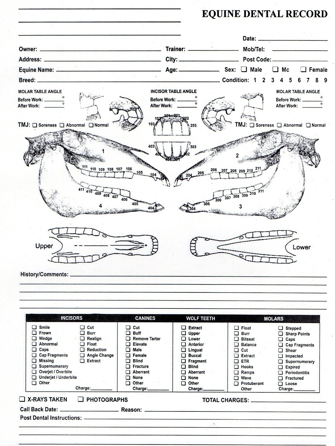 Equine Dental Chart For Equine Dentistry And Veterinary