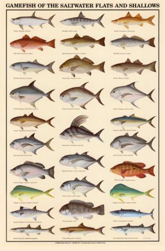 Tropical Fish Shop 2 Game