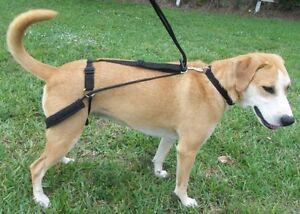 No Pulling Jumping Horgan Dog Harness First Back Leg