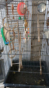 Bird Cages Kijiji Free Classifieds In Calgary Find A Job Buy A Car Find A House Or