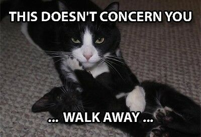 Funny Cat Meme Refrigerator Magnet 3 X 2 Fight Fighting Walk