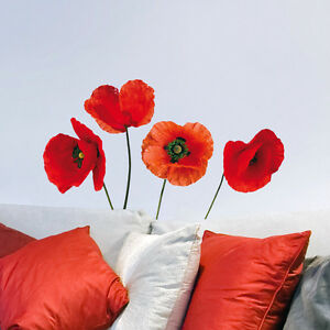 Rote Mohnblumen Roter Mohn Auf Weiss