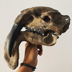 details sur fossile replique de crane de thylacosmilus atrox museum quality replica