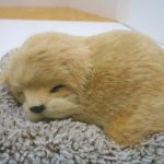 Perfect Petzzz Mini Baby Golden Retriever Puppy Dog For Sale Online