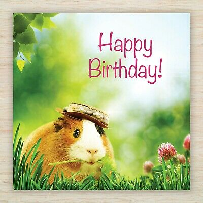 Funny Birthday Card Guinea Pig Brown White Small Pets Fast Free 1st Postage Ebay