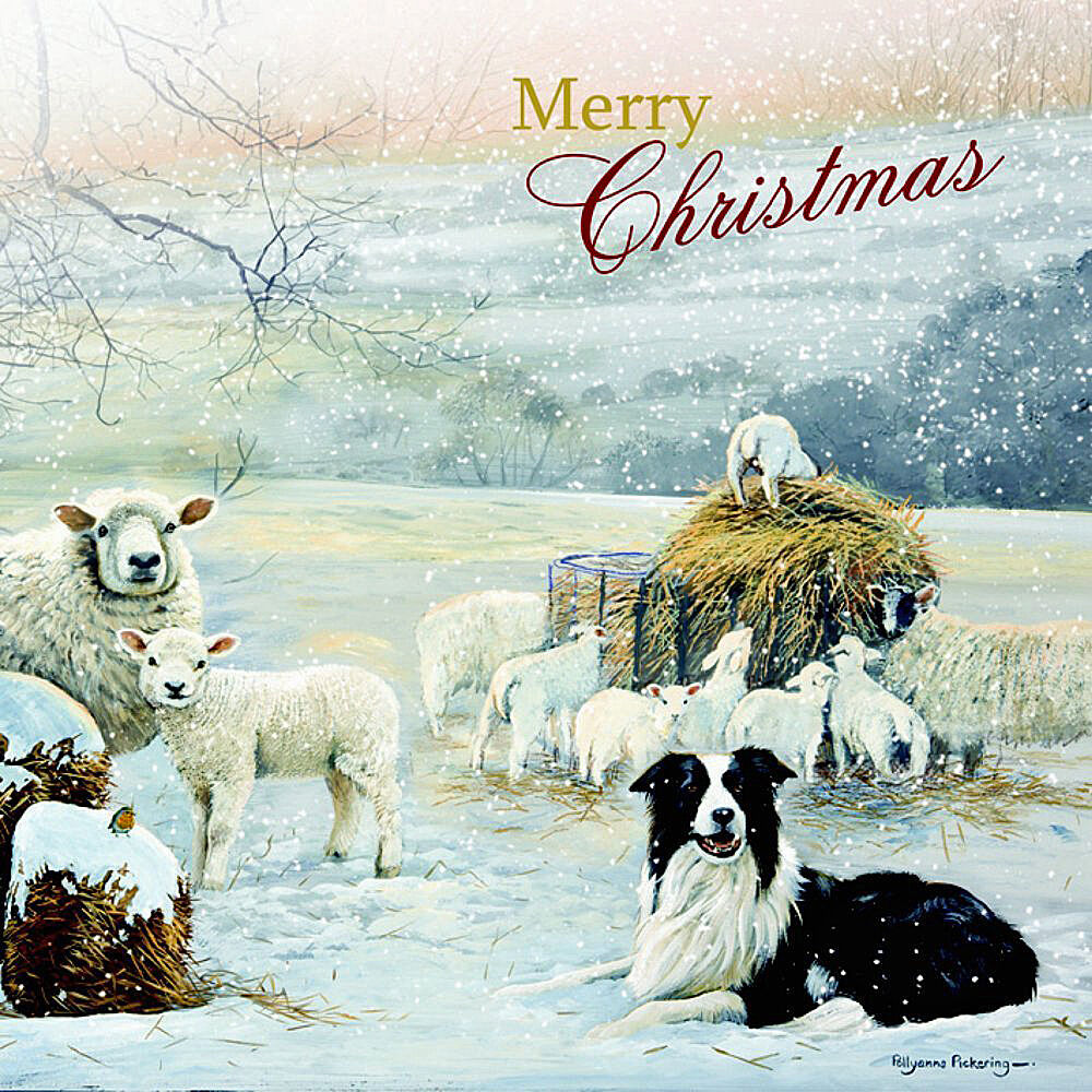 Border Collie Amp Sheep Charity Christmas Cards Guarding The