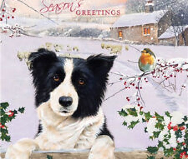 Border Collie Dog Robin Charity Christmas Cards Pack Of  Christmas Friends