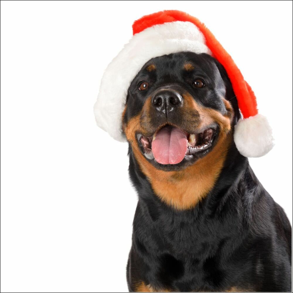 Rottweiler Christmas Card New Dog Cards Puppies Dogs Mum