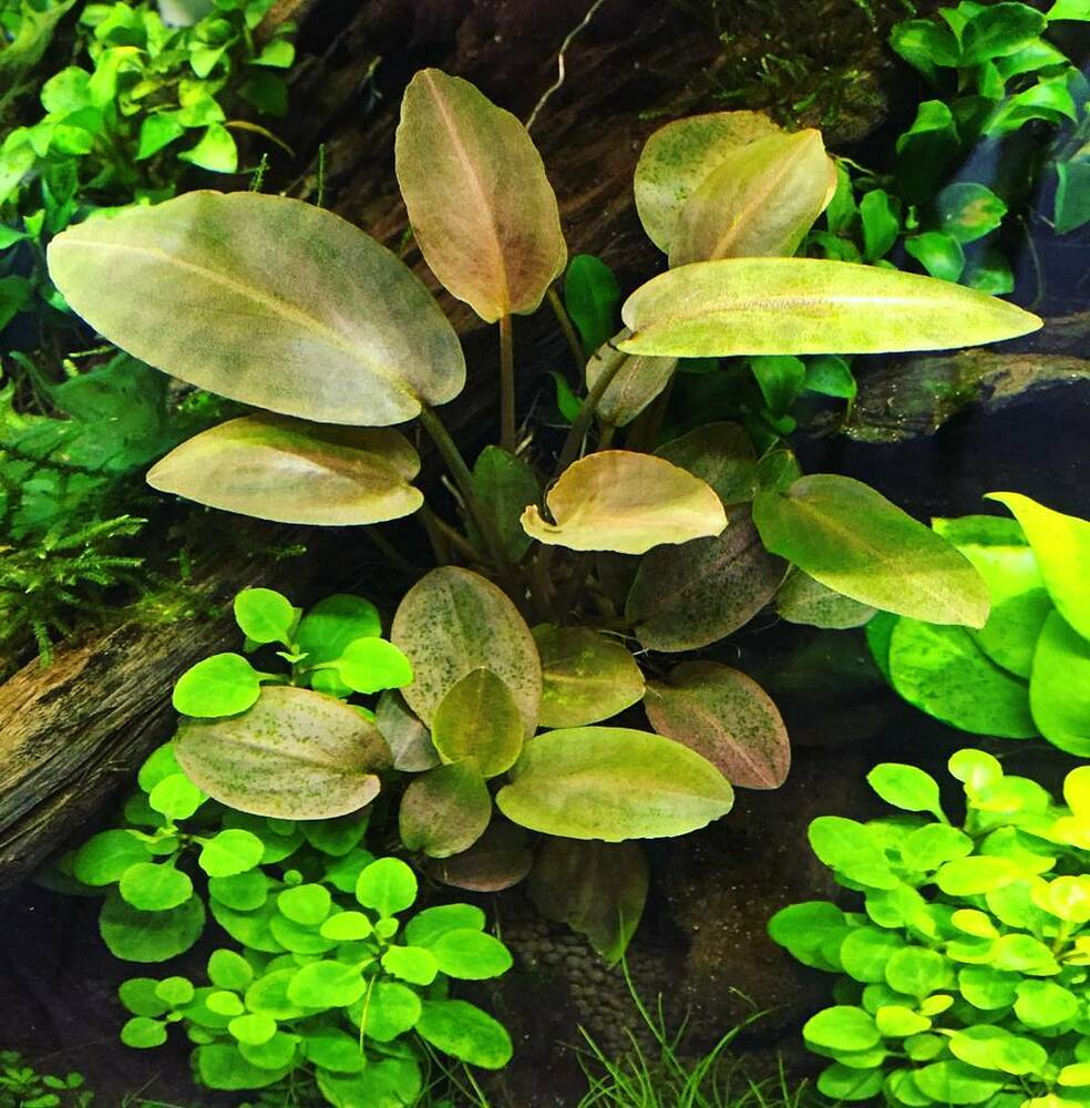 List Floating Plants