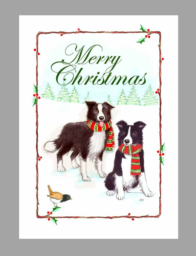 Border Collie Dogs Christmas Cards Box Of 16 Cards Amp 16