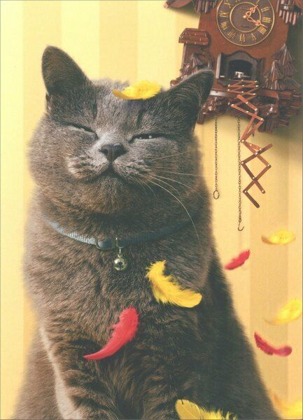 Satisfied Cat With Cuckoo Clock Birthday Card Greeting Card By Avanti Press EBay