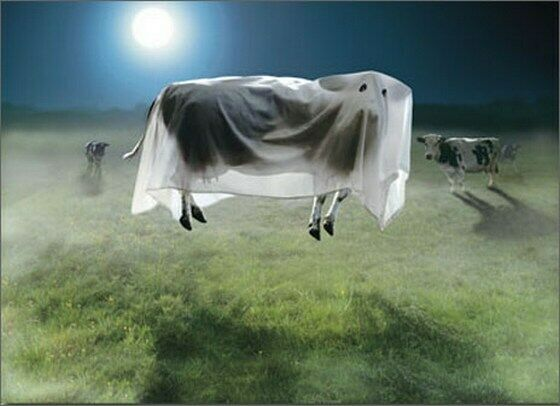 Ghost Cow Standout Stand Out Pop Up Halloween Card By