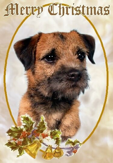 Border Terrier Dog A6 Christmas Card Design XBORDTER 5 By