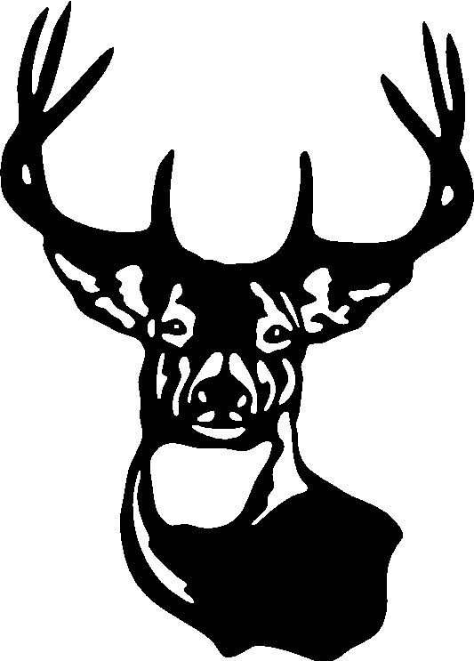 LARGE TYPICAL WHITETAIL DEER BUCK 8 POINT ANTlER Car Wall