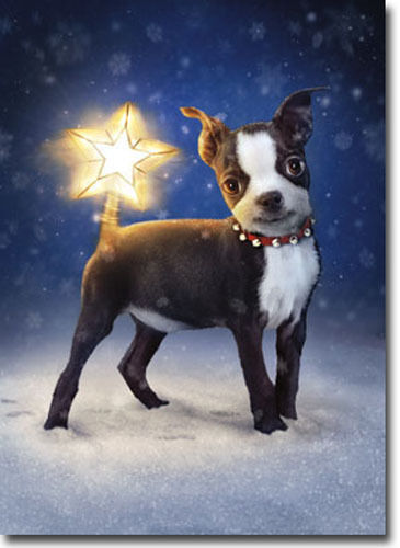 Dog With Star Topper Tail 10 Funny Boston Terrier Boxed