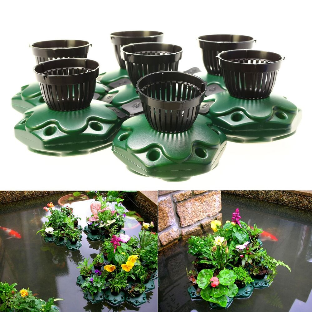 Amazon Pond Supplies