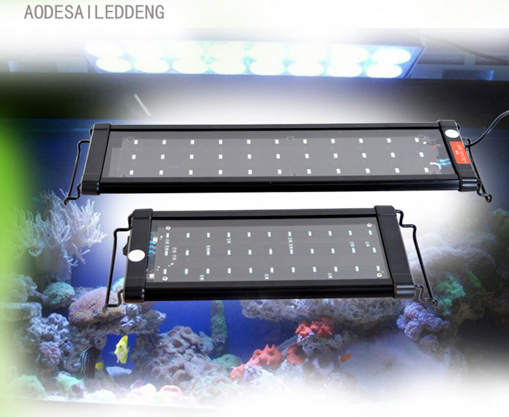 Led Projectable Tropical