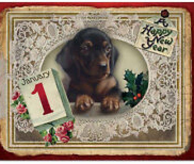Bgnyg Box Set Of  Lacy Holidays Happy New Years Dog Greeting Cards W Env