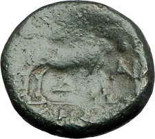 PELLA in MACEDONIA 148BC Authentic Ancient Greek Coin POSEIDON BULL OX i62241