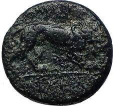 PERDIKKAS III 365BC Macedonia Hercules Lion RARE R1 Ancient Greek Coin i68114