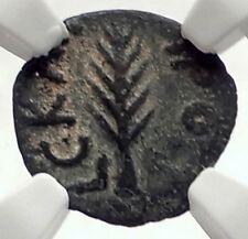 Biblical Jerusalem Saint Paul NERO PORCIUS FESTUS Ancient Roman Coin NGC i70957