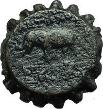 ANTIOCHOS VI Dionysos Ancient 144BC Seleukid Ancient Greek Coin ELEPHANT i66587