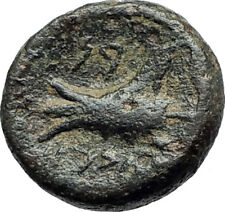 ARADOS in PHOENICIA Authentic Ancient 206BC Greek Coin w ZEUS & GALLEY i75499