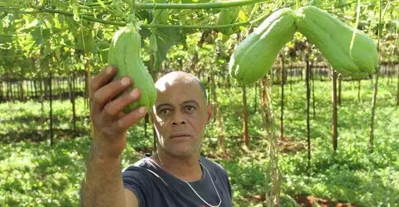 The toil of producer Edir Silva eats