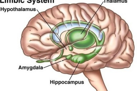 Interior Brain Electronic Wallpaper Electronic Wallpaper