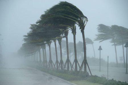 10日,劳德代尔堡街头飓风中的棕榈树。(Chip Somodevilla/Getty Images)