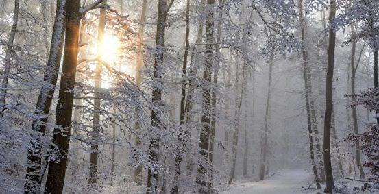 绿色歌曲:与雪共舞| 风和雪| 磨难冷静地