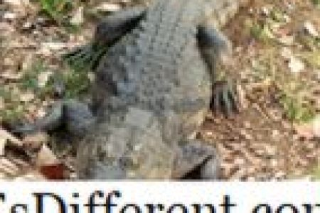 Best Home Design » unterschied zwischen krokodil und alligator