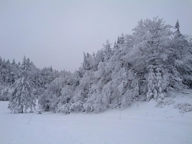 Trees encased in snow