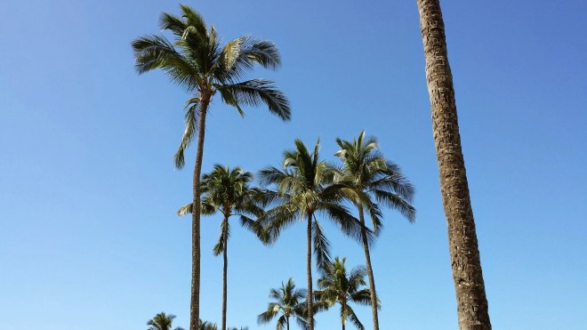 Palms in Poipu