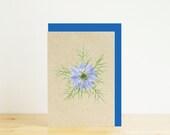 Blue nigella, Love-in-a-m...