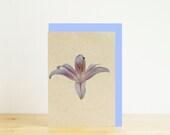 White lily mini card, bla...