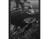 Floating Away - Bear - Framed poster