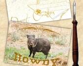 Howdy - Wildlife Animal P...