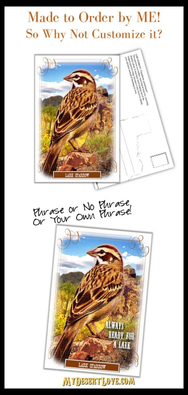 Lark Sparrow Photo Postca...