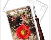 Wild Beauty Claret Cup Ca...