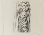 Yellow Birch~ drypoint wood grain pattern etching