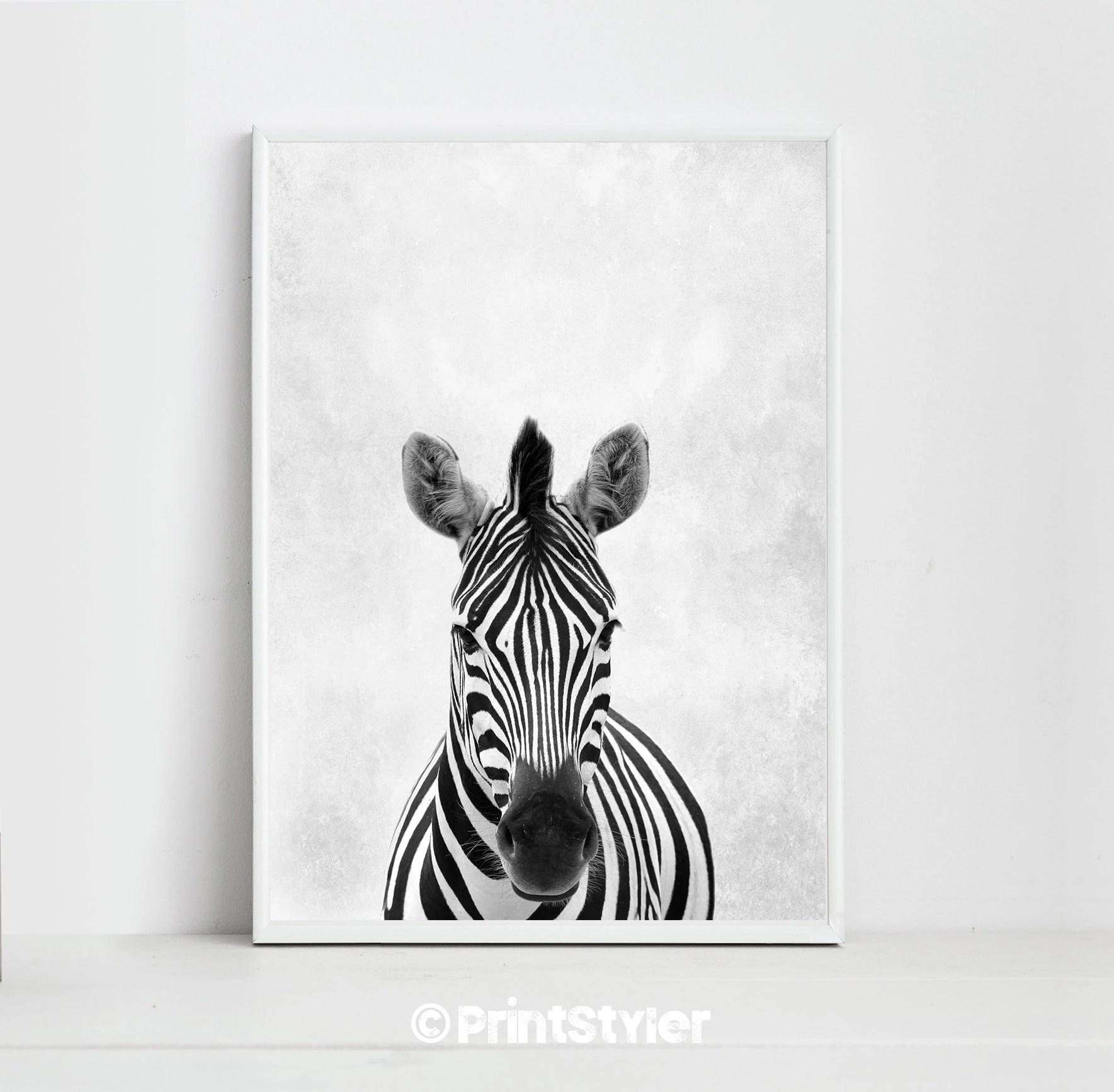 Zebra Print Zebra Art Zebra Poster Animal Prints