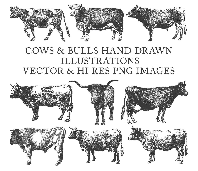 Cow Clipart Bull Clipart Farm Clipart Hand Drawn Engraving
