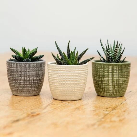 Trio Of Succulents With Ceramic Planters Plant Pots Etsy