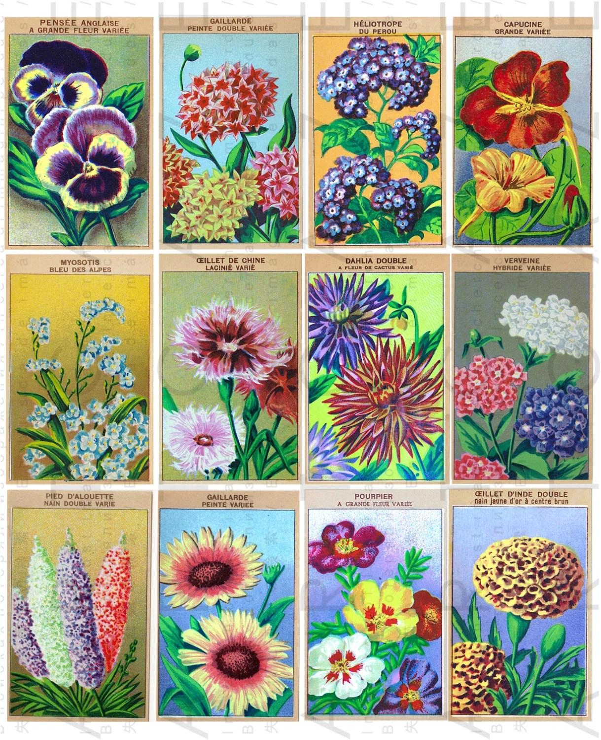 12 French Vintage Labels Flowers Seeds Art Deco