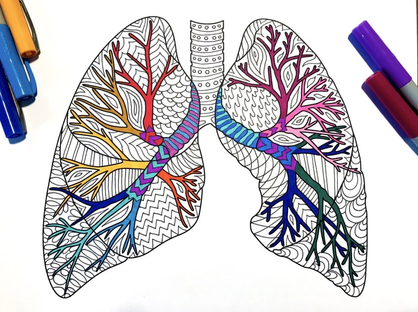 Lungs Human Anatomy PDF Zentangle Coloring Page   Etsy