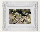 Dewy Berry Blossom art - ...